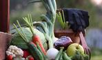 Лунный календарь садовода-огородника на сентябрь