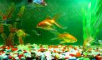 Витамины для аквариумных рыбок. Делаем сами