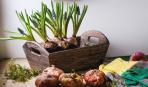 6 правил весенней посадки луковичных цветов