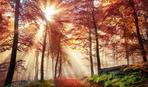17 жовтня - Єрофєєв день: що варто знати про це свято