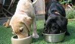 Какие крупы полезны собаке