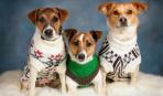 Нужна ли собакам одежда?