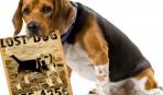 Все о чипировании собак