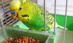 Принадлежности, необходимые для клетки волнистого попугая