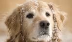 Правила выгула собаки зимой