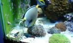 Плавающая и донная кормушки для рыбок