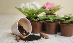 Как приготовить стерильный субстрат для комнатных растений