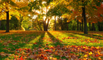 Советы садоводам: если дерево не сбросило листву