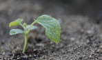 Подзимний посев овощей и зелени: как правильно организовать