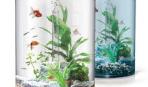 Карантин для новых аквариумных рыбок