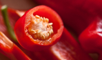 Красиво и вкусно: как вырастить перец в контейнерах