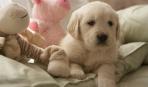 Как обустроить место для собаки в квартире или доме