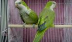 Какой должна быть клетка для попугая?