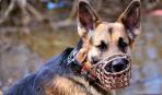 Намордник – гарантия защиты для людей и собаки
