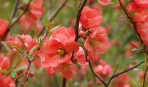 Растения и цветы для трудных уголков сада – тени, заболоченных, сухих и неплодородных участков
