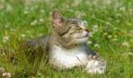 Как спасти кота от жары