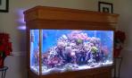 Выбираем аквариум