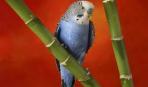 Если вы купили попугая...