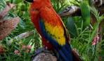 Самые-самые попугаи
