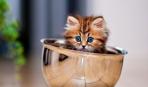 Выбираем котенка