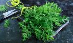 Как вырастить первую зелень: советы опытных садоводов