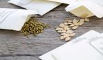 Выбор семян для посадки: основные правила