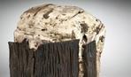 Болотное масло: самое старое масло в мире