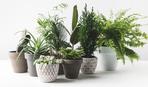 ТОП-5 кімнатних рослин для очищення повітря в квартирі