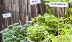 Огород на подоконнике: 10 простых идей