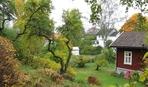 О каких работах в саду и огороде нельзя забыть в ноябре