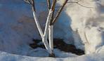 Для чего нужно белить деревья на зиму