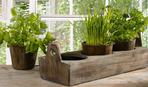Огород на подоконнике: как вырастить зелень и пряные травы