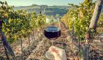 А вы знали, что до сих пор вино мы пьем из древнего винограда?