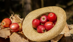 Яблочный сезон: ТОП-5 десертов, которые заставят забыть обо всем