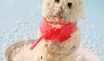 Пирожное «Снеговичок»