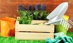 Лунный календарь садовода-огородника на июнь