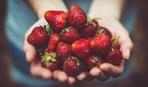 Всё о клубника: как выбрать, как подавать и как хранить