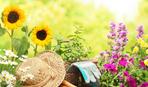 Лунный календарь садовода и огородника на август 2019 года