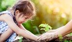 Правила подкормки почвы после уборки урожая