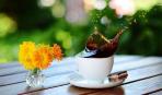 Кофе во время беременности: пить или не пить?