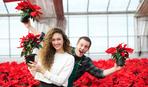 Пуансеттия – главный цветок Рождества