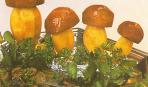 Лесовички-боровички