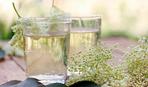Газировка из цветов бузины: как приготовить