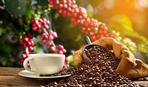 Все о кофе: его виды, как готовят и подают