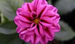 Какие комнатные цветы цветут круглый год: 7 королей