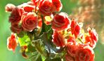 Пересадка комнатных растений: мастер-класс