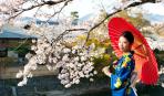 День зелени в Японии: особенности мероприятия