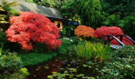 ТОП-10 вдохновляющих идей для создания пруда в саду