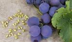 Топ-5 фруктов, которые надо есть с косточками