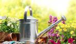 Календарь огородника-2017: когда правильно сажать рассаду